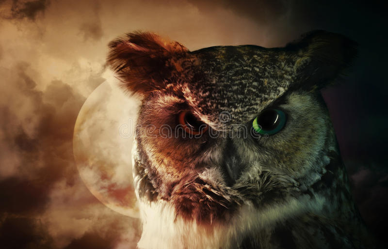 Scary Night Owl on the Hunt stock image