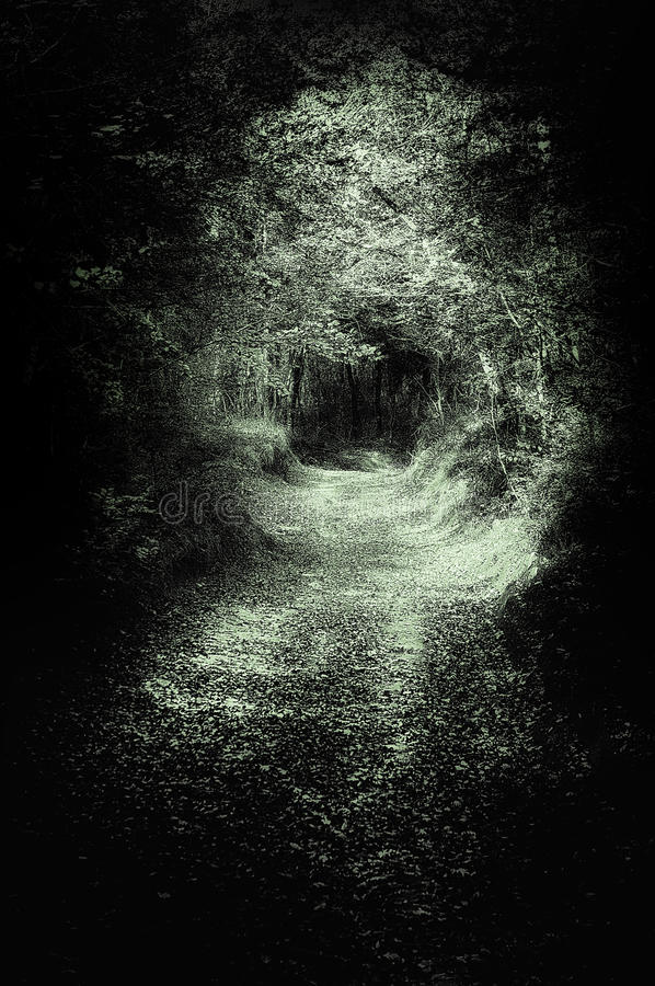 Scary path in dark forest royalty free stock images