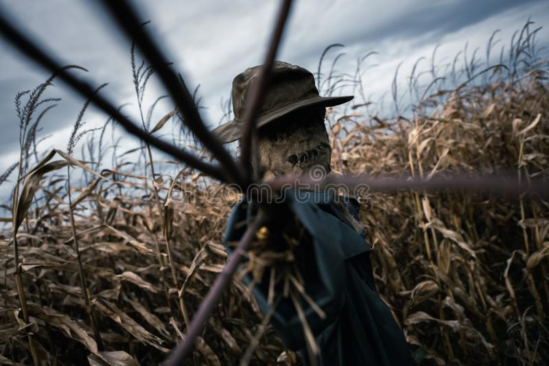 Scary scarecrow in a hat royalty free stock photo