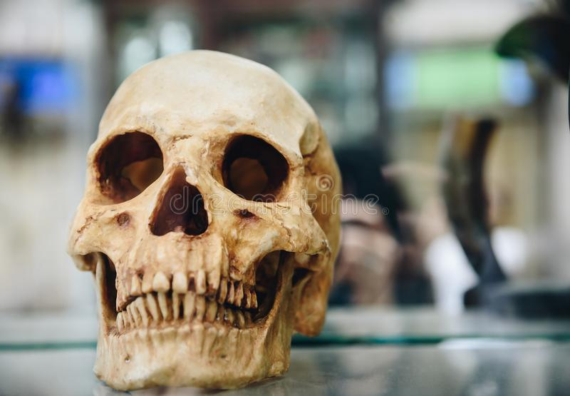 A scary skull placed on the glass. royalty free stock image
