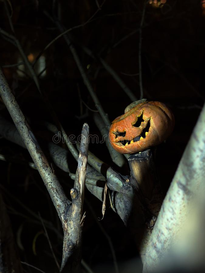 A scary smiling pumpkin among the branches of a tree at night. royalty free stock photography