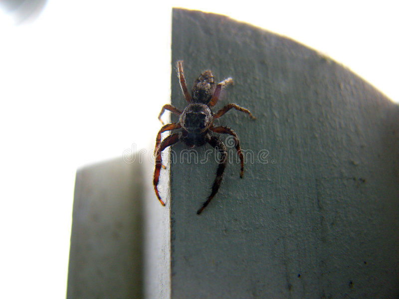 Scary Spider 2 stock image
