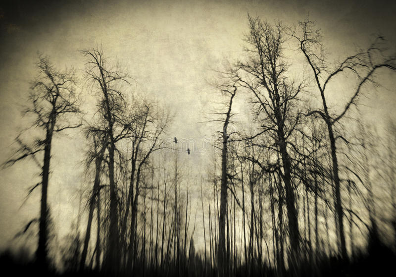 Download Scary winter woods stock illustration. Image of moody - 27938160