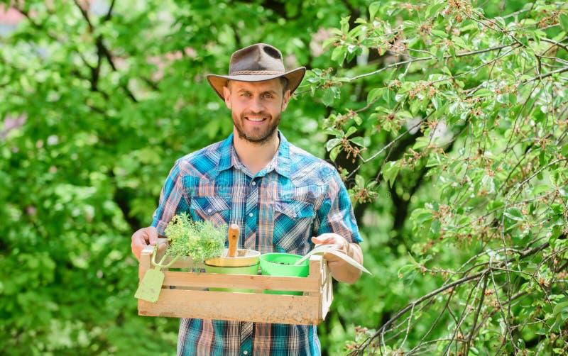 Scatola barbuta della tenuta del tipo del giardiniere con lo strumento di giardinaggio del vaso e della zappa di fiore Consiglio  immagini stock libere da diritti