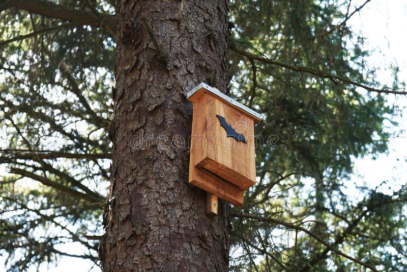 Scatola del pipistrello in albero fotografie stock libere da diritti