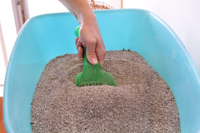 Scatola della lettiera di pulizia La mano è pulizia della scatola della lettiera con la spatola verde Sabbia di pulizia del gatto fotografia stock libera da diritti