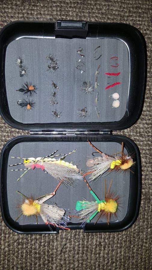 Scatola della mosca fotografia stock libera da diritti