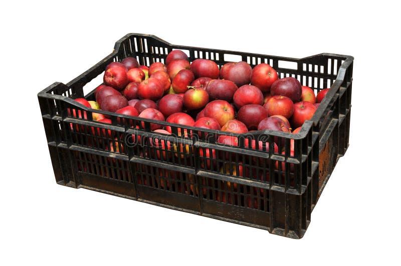 Scatola di di plastica la mela immagini stock libere da diritti