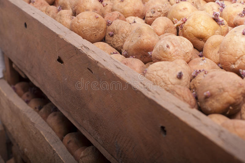 Scatola con la patata immagine stock libera da diritti