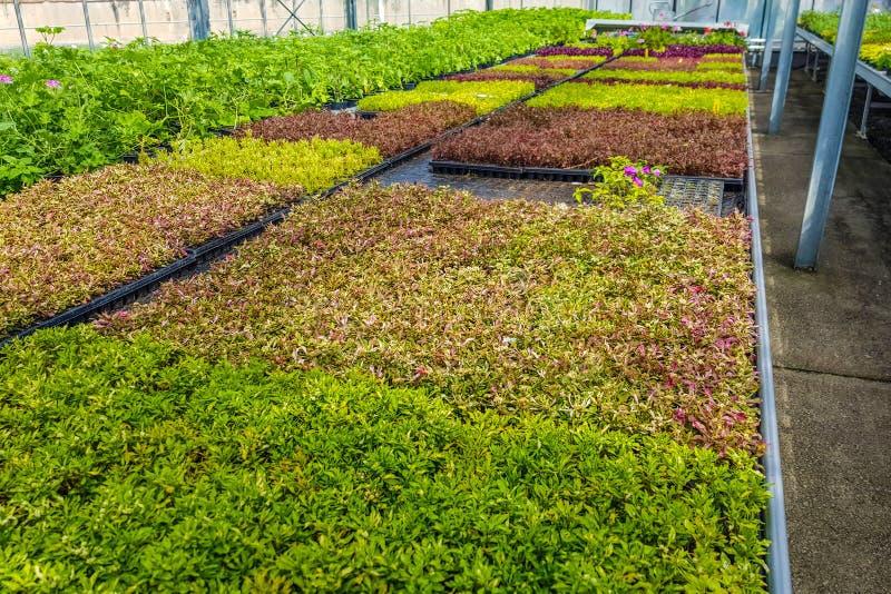 Scatole con i germogli di crescita di piante Agricoltura industriale fotografia stock