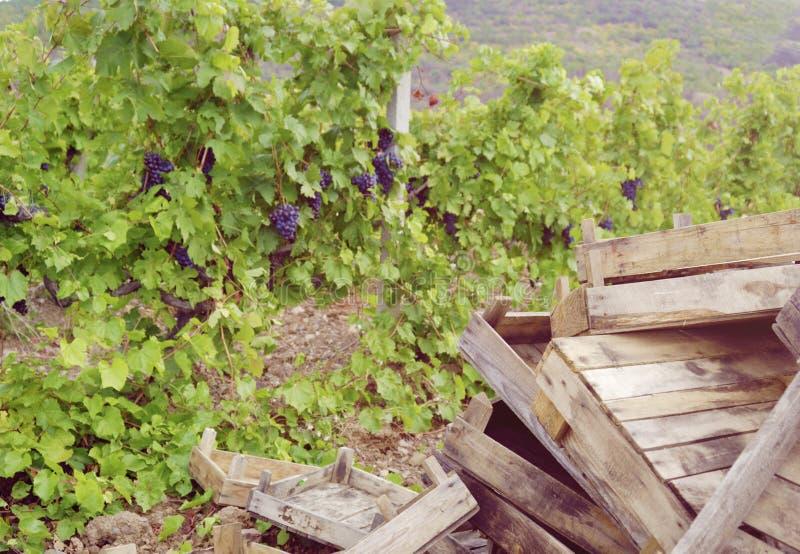 Scatole vuote per l'uva fotografia stock libera da diritti