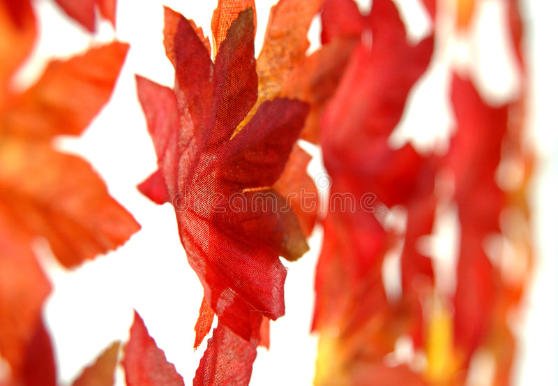 Scattered fall leaves. A scattered pile of colored fall leaves on a white background royalty free stock photos