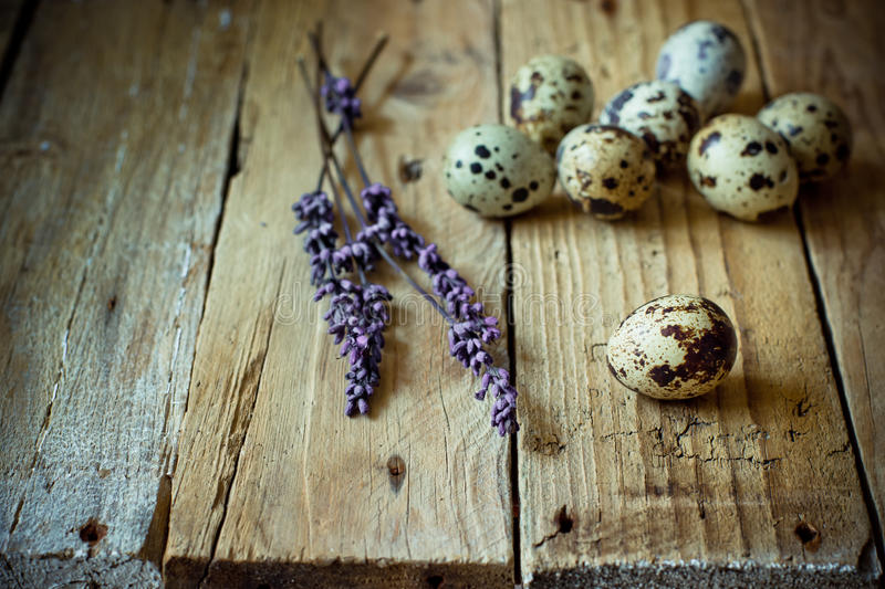 Scattered quail eggs on barn wood with lavender twigs, Easter decoration. Simplicity minimalistic concept, kinfolk, copyspace royalty free stock images