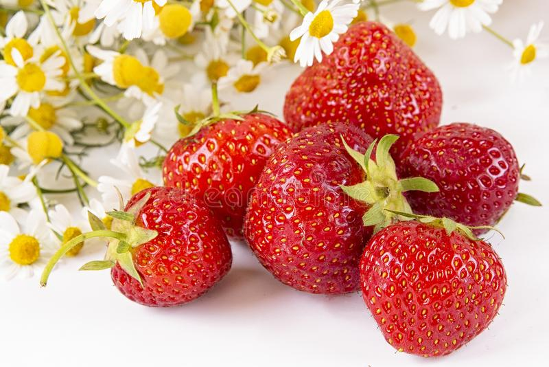 Scattered strawberries on a light background with a bouquet of chamomile flowers . Summer berry season royalty free stock images