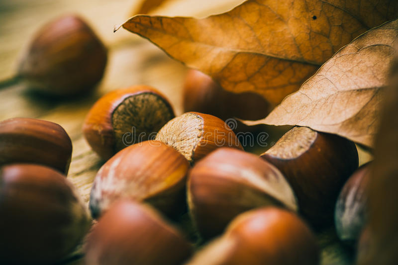 Scattered whole hazelnuts on weathered wood background, dry autumn brown leaves, fall mood royalty free stock image