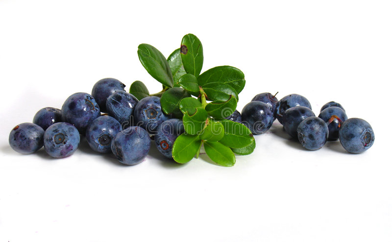 Scattering of bilberries. On white background stock photography