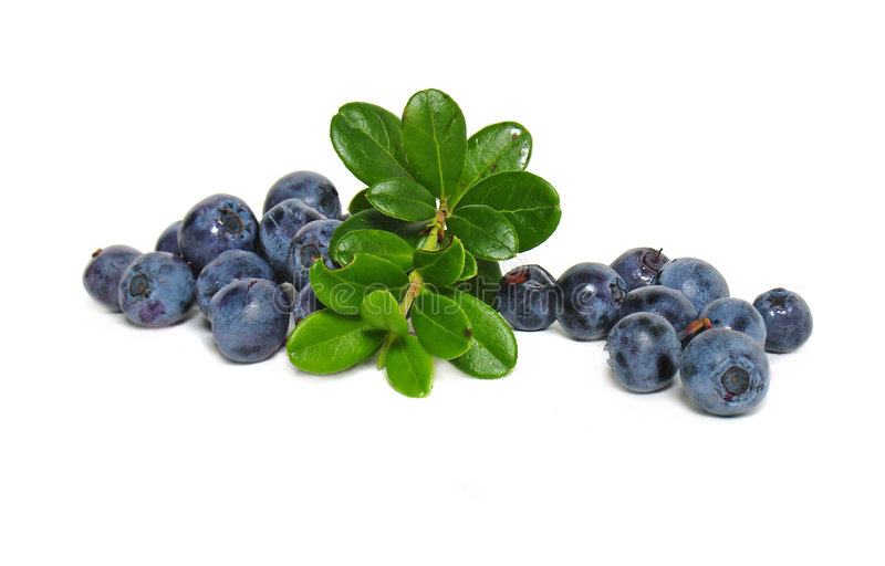 Scattering of bilberries. On white background royalty free stock photo