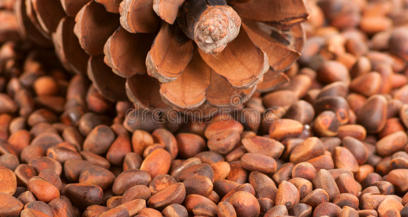 Download Scattering Of Pine Nuts And A Large Pine Cone. Stock Image - Image: 34824061