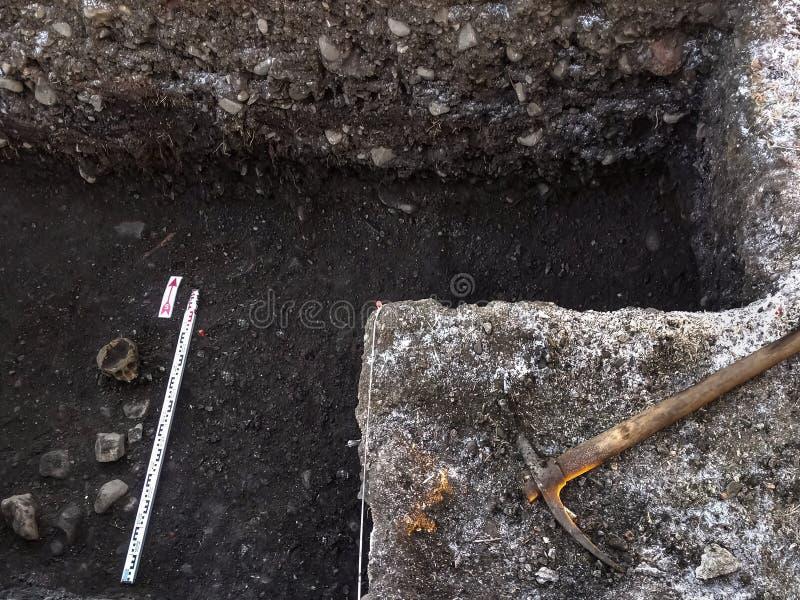Scavo archeologico con del cranio mezzo ancora sepolto nella terra e negli strumenti che si trovano accanto fotografie stock libere da diritti