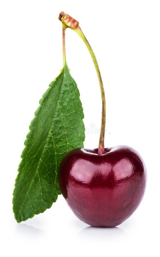 Scelga le bacche mature della ciliegia con la foglia fotografia stock libera da diritti