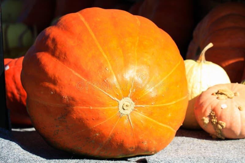 Scelta delle zucche gialle e rosse nelle dimensioni e nelle forme differenti decorate su un carretto in autunno luminoso Paesi Ba fotografie stock