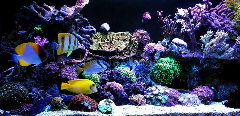 Scena in acquario della barriera corallina dell'acqua salata immagini stock