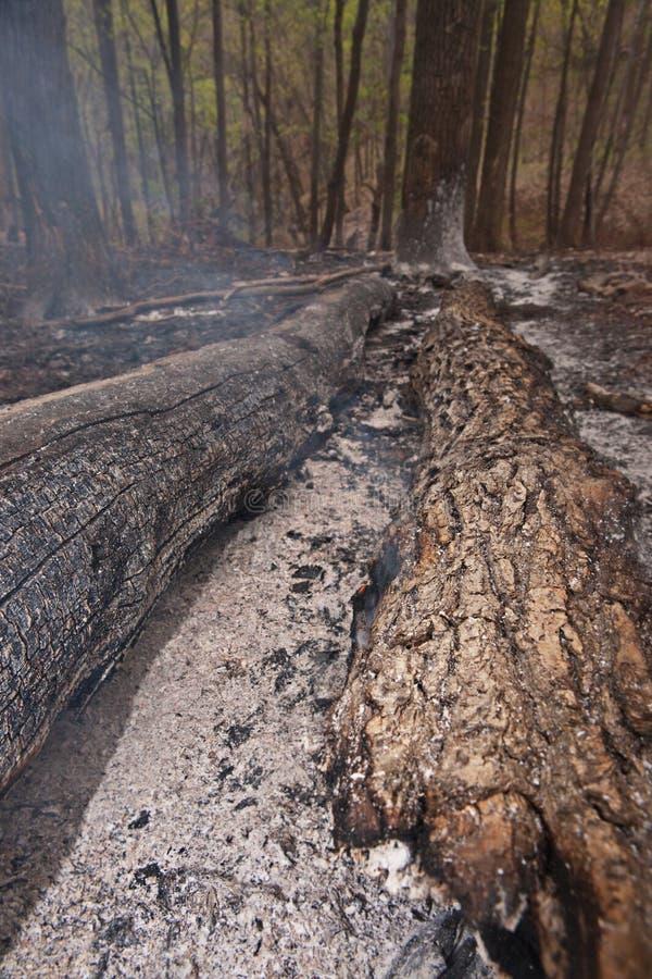 Scena bruciata della foresta. fotografie stock