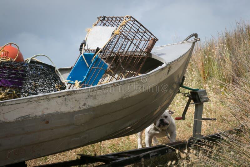 Scena classica della spiaggia della Nuova Zelanda - cane del toro che custodice battello pneumatico di alluminio in pieno dell'at immagine stock libera da diritti