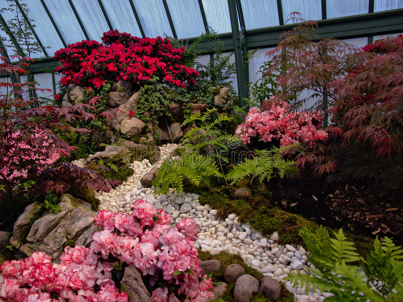 Scena con i fiori rossi e rosa nelle serre reali di Laeken fotografia stock libera da diritti