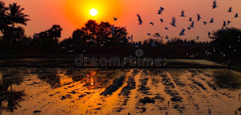Scena degli uccelli di tramonto fotografie stock libere da diritti
