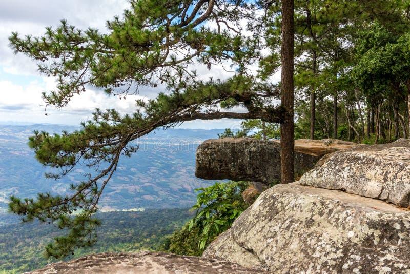 Scena del criff di Lomsak del punto di riferimento al parco nazionale Tailandia del kradueng di phu fotografie stock