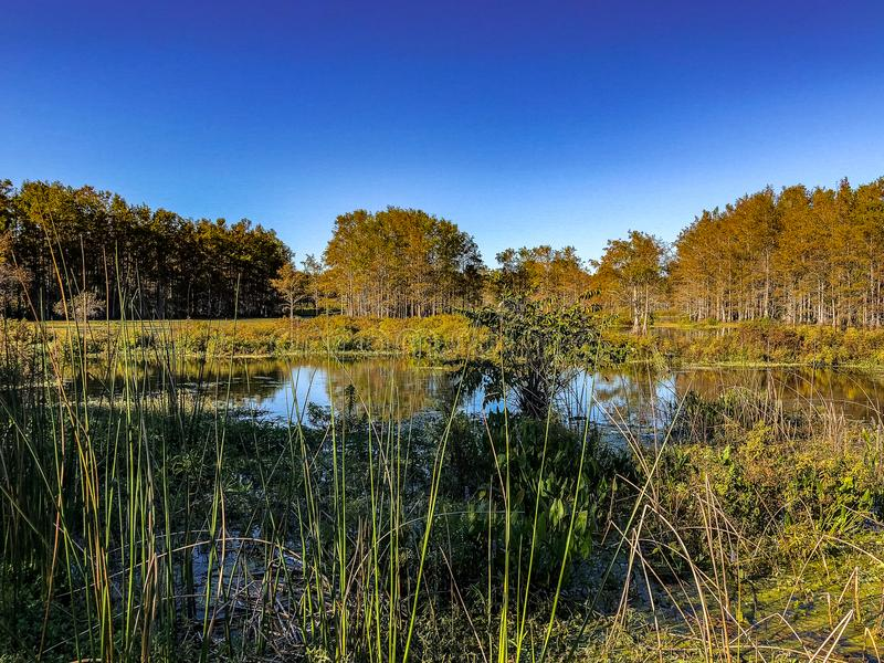 scena del fiume della palude fotografia stock