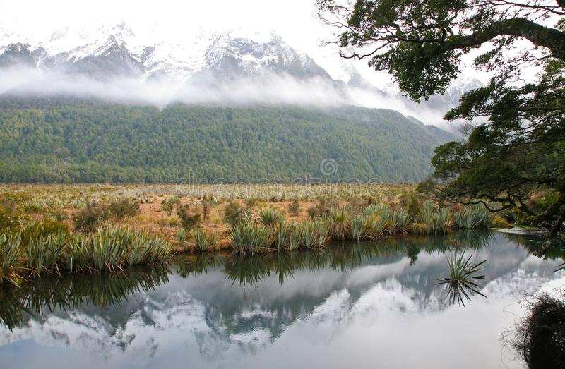 Scena del fiume in Fiordland fotografia stock
