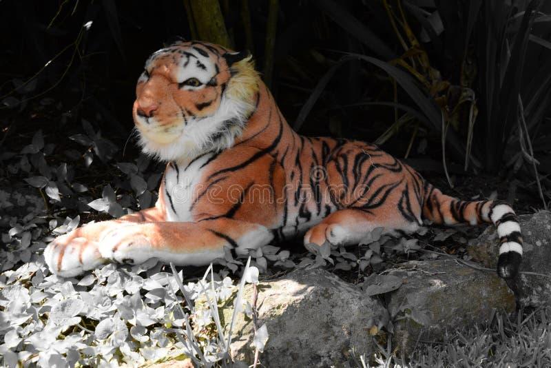 Scena del giardino del tiro della tigre della peluche fotografie stock libere da diritti