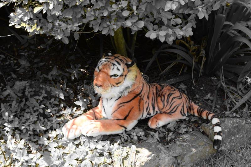 Scena del giardino del tiro della tigre della peluche immagini stock libere da diritti