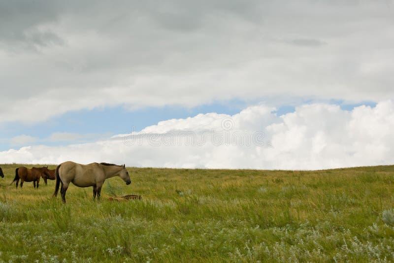 Scena del pascolo con la nube di tempesta immagine stock libera da diritti