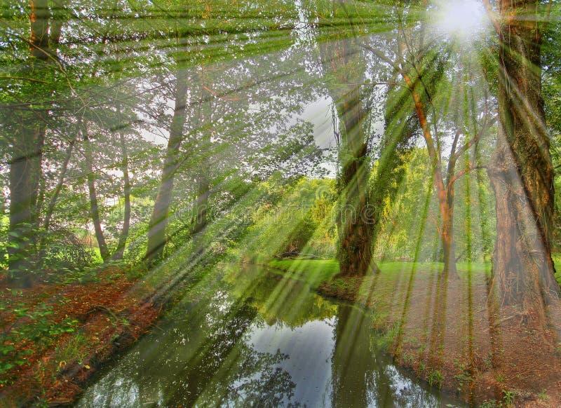 Download Scena del raggio di Sun immagine stock. Immagine di fantastico - 7308331