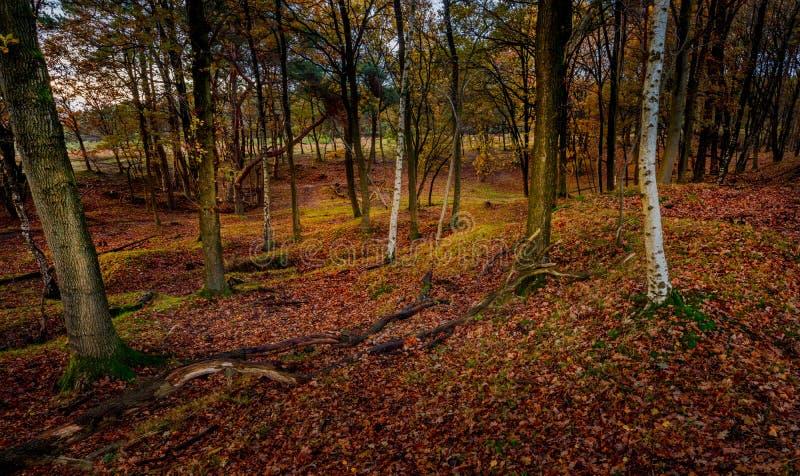 Scena del terreno boscoso nella foresta fotografia stock libera da diritti