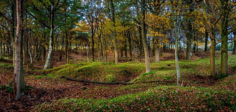 Scena del terreno boscoso nella foresta fotografie stock