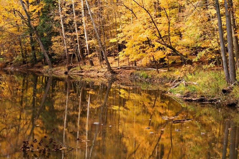 Scena dell'acqua di legni di caduta fotografia stock