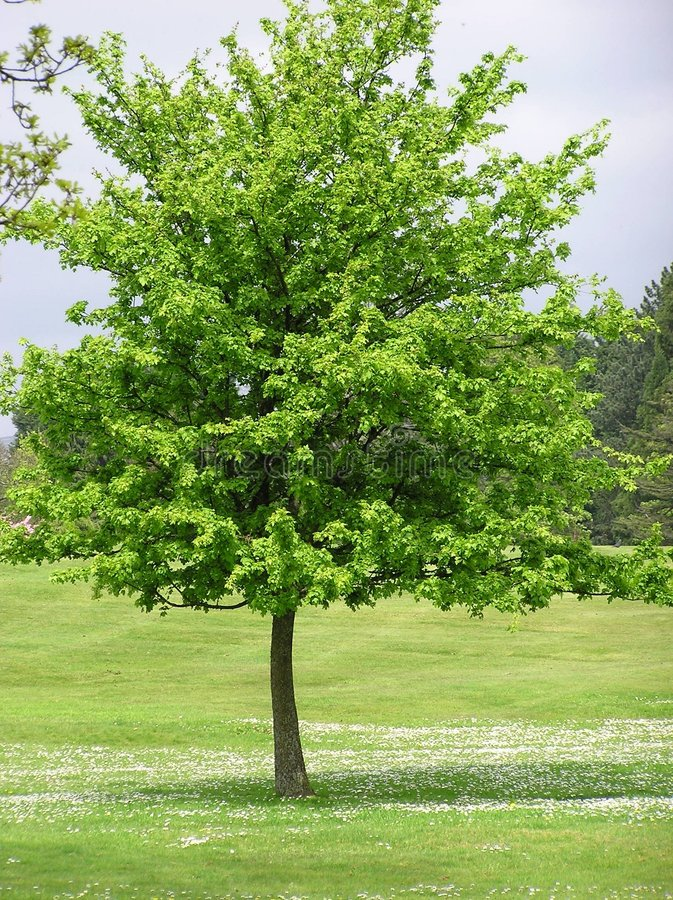Scena dell'albero fotografie stock libere da diritti