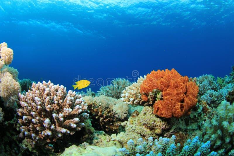 Scena della barriera corallina
