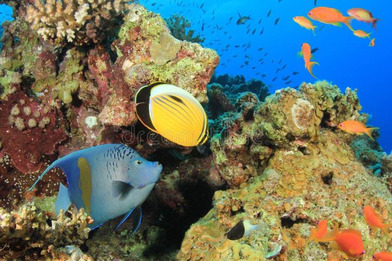 Scena della barriera corallina con i pesci tropicali fotografia stock