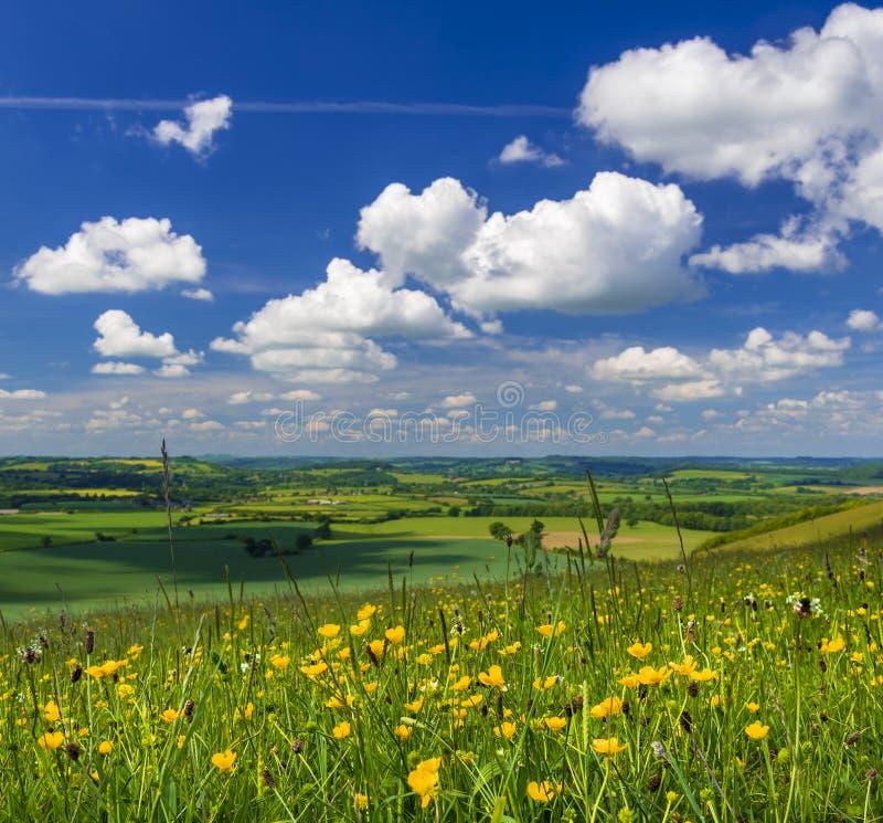 Scena della campagna di estate in Blackmore Vale ed in Vale di Wardour fotografia stock
