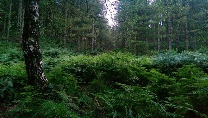 Scena della foresta fotografie stock