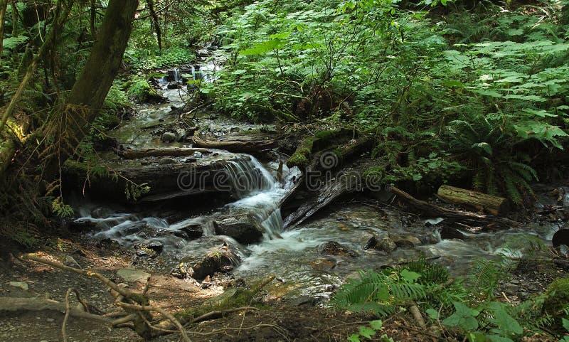 Scena della foresta fotografia stock libera da diritti