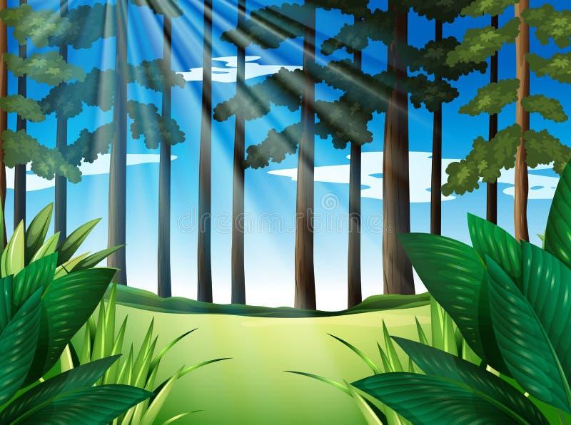 Scena della foresta con gli alberi al giorno illustrazione di stock