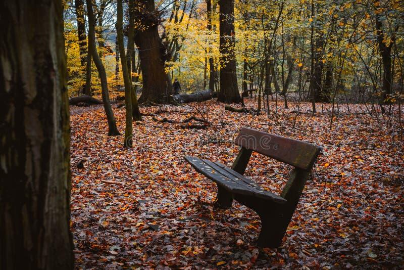 Scena della foresta di autunno con il banco vuoto Caduta d'avvolgimento della foglia del percorso di camminata immagine stock