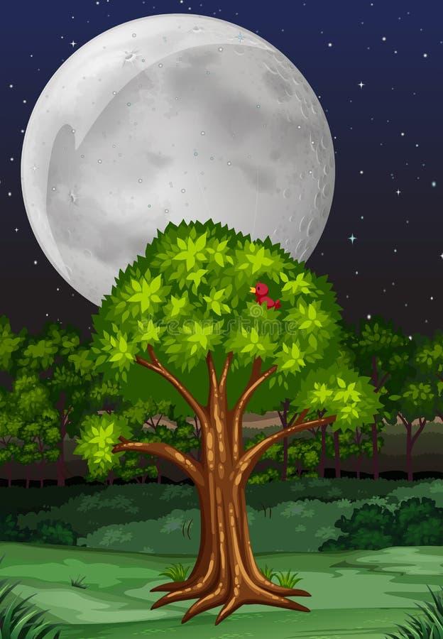 Scena della natura con l'albero e fullmoon alla notte illustrazione di stock