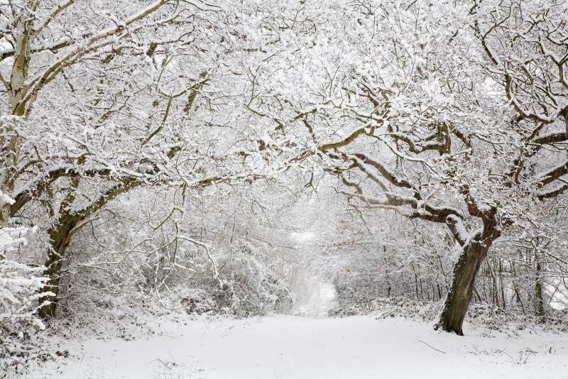 Scena della neve del terreno boscoso immagine stock libera da diritti